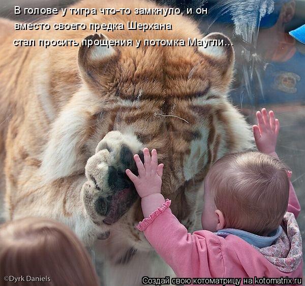 Котоматрица: В голове у тигра что-то замкнуло, и он  вместо своего предка Шерхана  стал просить прощения у потомка Маугли...