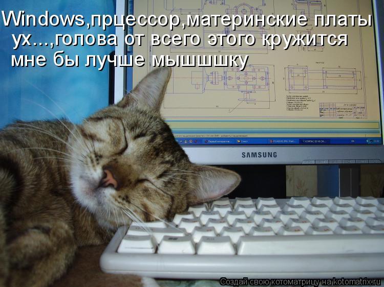 Котоматрица: Windows,прцессор,материнские платы ух...,голова от всего этого кружится  мне бы лучше мышшшку