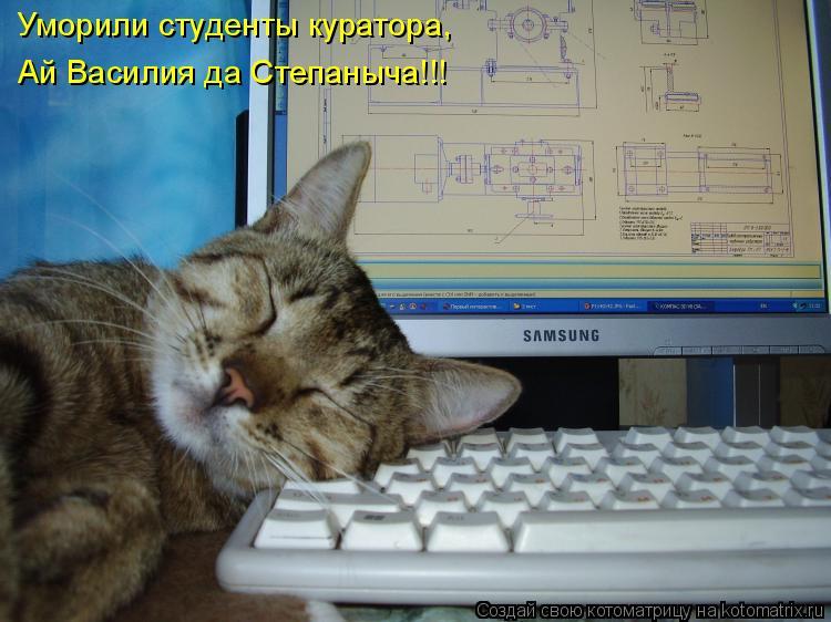 Котоматрица: Уморили студенты куратора,  Ай Василия да Степаныча!!!
