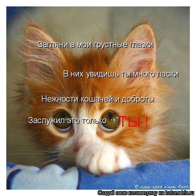 Котоматрица: Загляни в мои грустные глазки В них увидишь ты много ласки Нежности кошачей и доброты... Заслужил это только  ТЫ !