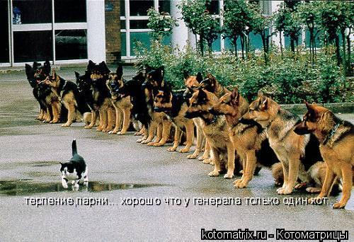 Котоматрица: терпение,парни... хорошо что у генерала только один кот.. терпение,парни... хорошо что у генерала только один кот..