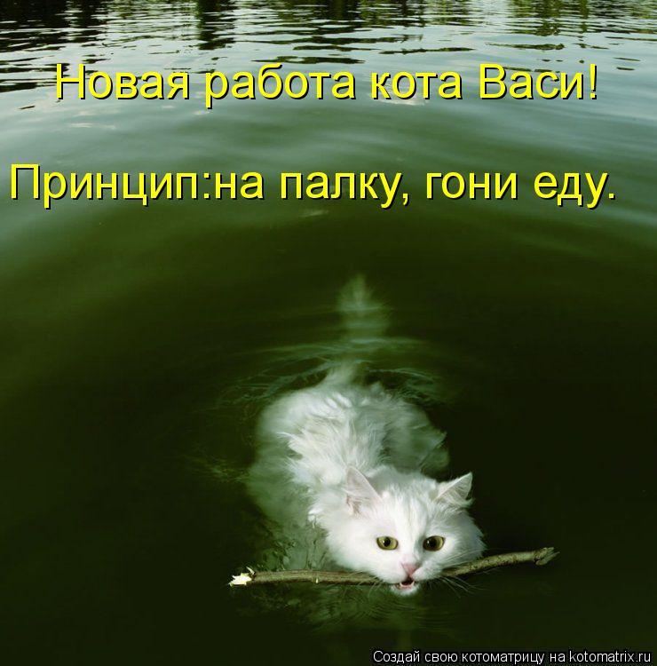 Котоматрица: Новая работа кота Васи! Принцип:на палку, гони еду.
