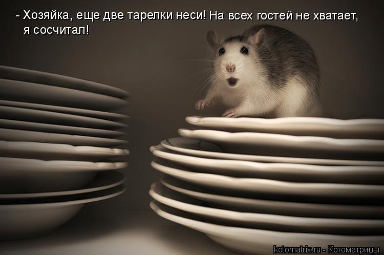 Котоматрица: - Хозяйка, еще две тарелки неси! На всех гостей не хватает,  я сосчитал!