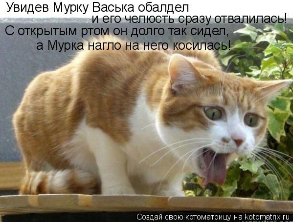 Котоматрица: и его челюсть сразу отвалилась! Увидев Мурку Васька обалдел С открытым ртом он долго так сидел, а Мурка нагло на него косилась!