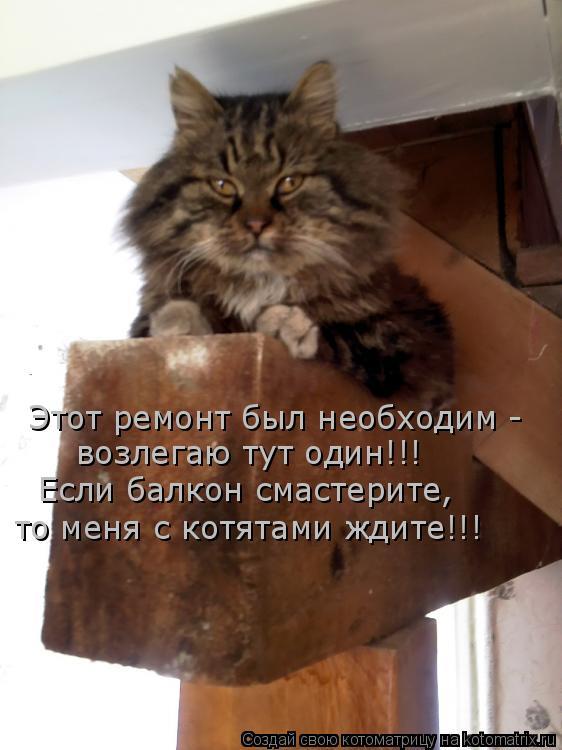 Котоматрица: Этот ремонт был необходим - возлегаю тут один!!! Если балкон смастерите, то меня с котятами ждите!!!