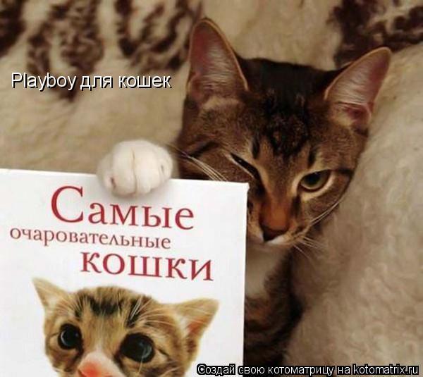 Котоматрица: Playboy для кошек
