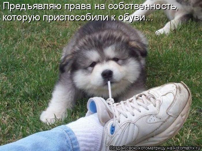 Котоматрица: Предъявляю права на собственность, которую приспособили к обуви...