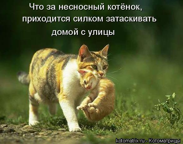 Котоматрица: Что за несносный котёнок,  приходится силком затаскивать  домой с улицы