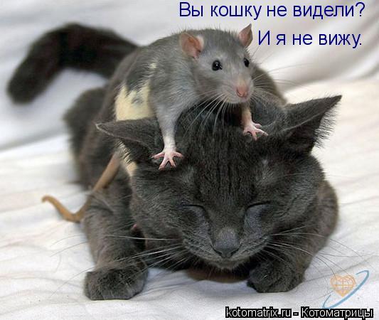 Котоматрица: Вы кошку не видели? И я не вижу.