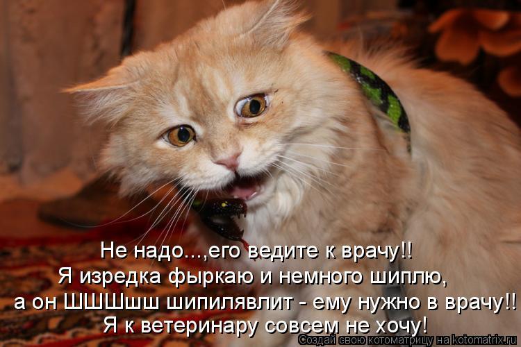 Котоматрица: а он ШШШшш шипилявлит - ему нужно в врачу!! Я к ветеринару совсем не хочу! Я изредка фыркаю и немного шиплю, Не надо...,его ведите к врачу!!