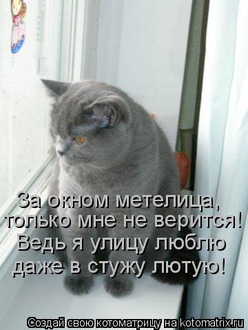 Котоматрица: За окном метелица, только мне не верится! Ведь я улицу люблю даже в стужу лютую!