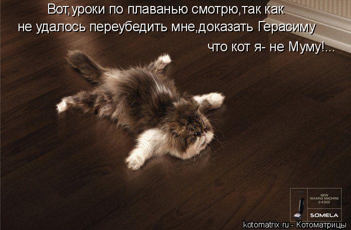 Котоматрица: Вот,уроки по плаванью смотрю,так как не удалось переубедить мне,доказать Герасиму что кот я- не Муму!...