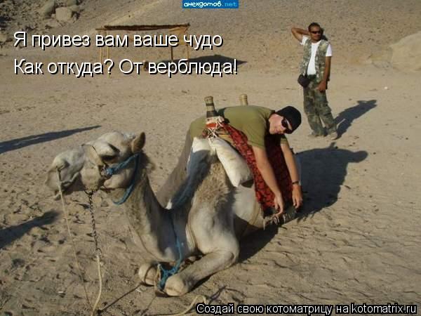 Котоматрица: Я привез вам ваше чудо Как откуда? От верблюда!