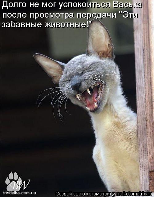 """Котоматрица: Долго не мог успокоиться Васька после просмотра передачи """"Эти  забавные животные!"""""""