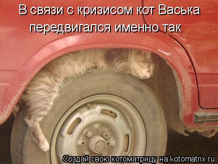 Котоматрица: В связи с кризисом кот Васька передвигался именно так