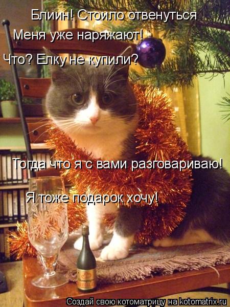 Котоматрица: Блиин! Стоило отвенуться Меня уже наряжают! Что? Елку не купили? Тогда что я с вами разговариваю! Я тоже подарок хочу!