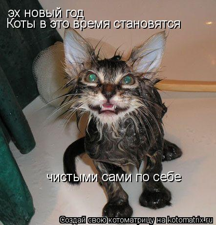 Котоматрица: эх новый год Коты в это время становятся  чистыми сами по себе