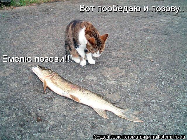 Котоматрица: Емелю позови!!! Вот пообедаю и позову..