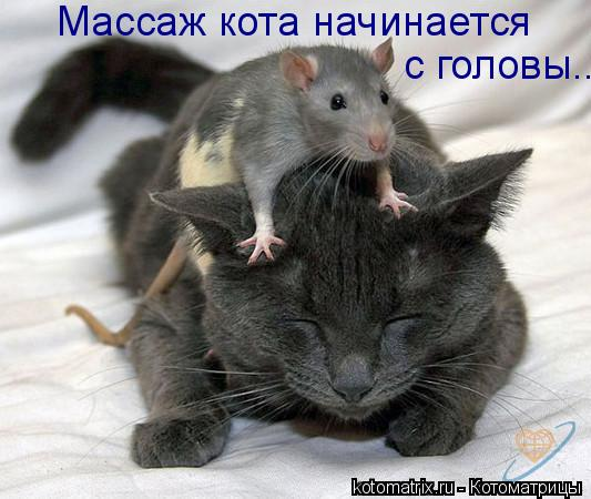 Котоматрица: Массаж кота начинается  с головы...