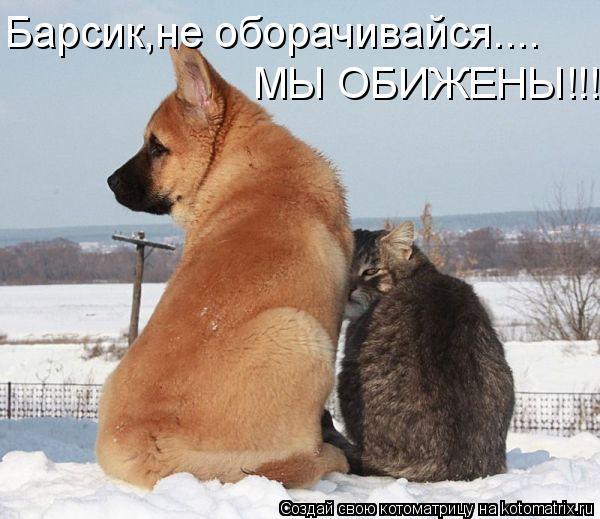 Котоматрица: Барсик,не оборачивайся.... МЫ ОБИЖЕНЫ!!!!!!!!!