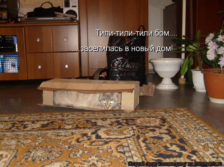 Котоматрица: Тили-тили-тили бом.... ....заселилась в новый дом!