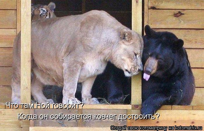 Котоматрица: Что там Ной говорит? Когда он собирается ковчег достроить?