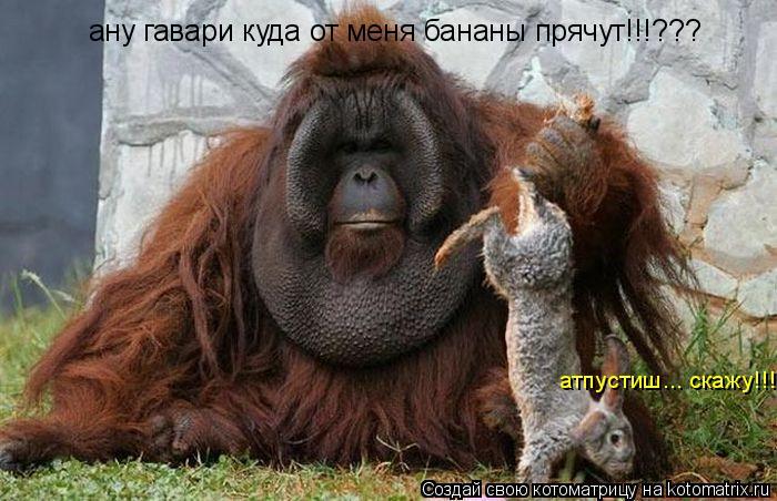 Котоматрица: ану гавари куда от меня бананы прячут!!!??? атпустиш... скажу!!!