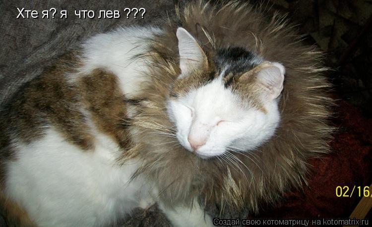 Котоматрица: Хте я? я  что лев ???