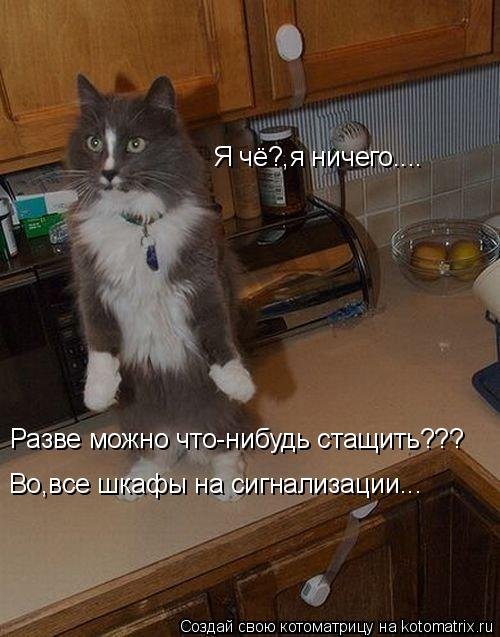 Котоматрица: Я чё?,я ничего.... Разве можно что-нибудь стащить??? Во,все шкафы на сигнализации...