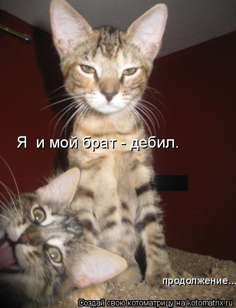 Котоматрица: Я  и мой брат - дебил. продолжение...