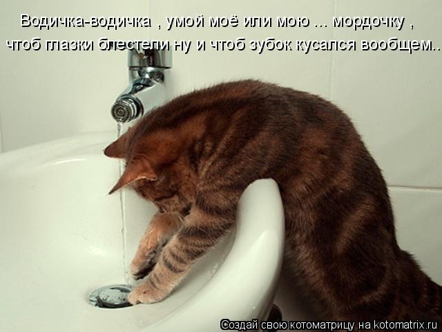 Котоматрица: Водичка-водичка , умой моё или мою ... мордочку , чтоб глазки блестели ну и чтоб зубок кусался вообщем...