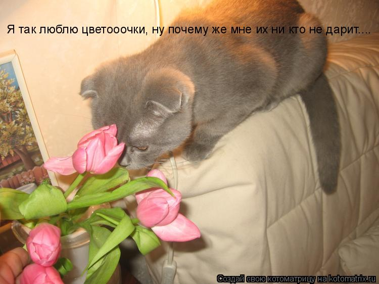 Котоматрица: Я так люблю цветооочки, ну почему же мне их ни кто не дарит....