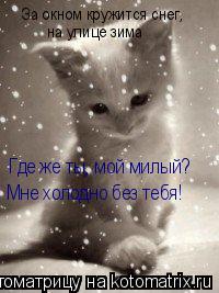 Котоматрица: За окном кружится снег, на улице зима Где же ты, мой милый? Мне холодно без тебя!
