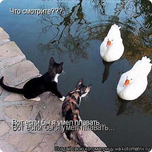 Котоматрица: Что смотрите??? Вот если бы я умел плавать... Вот если бы я умел плавать... Вот если бы я умел плавать...