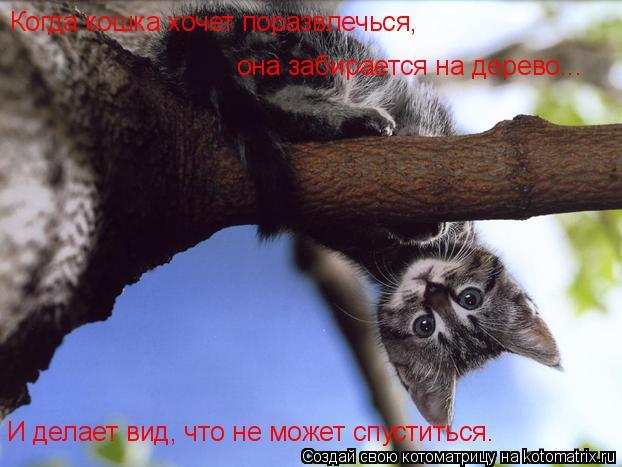 Котоматрица: Когда кошка хочет поразвлечься, она забирается на дерево... И делает вид, что не может спуститься.