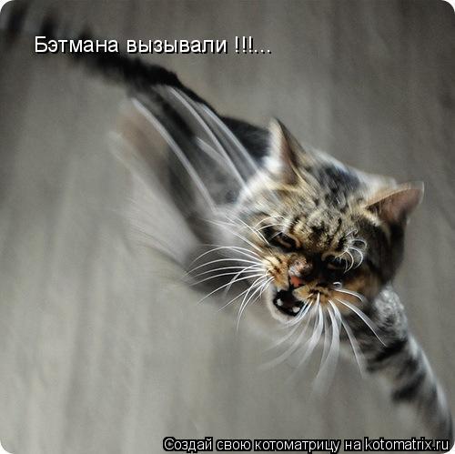 Котоматрица: Бэтмана вызывали !!!...