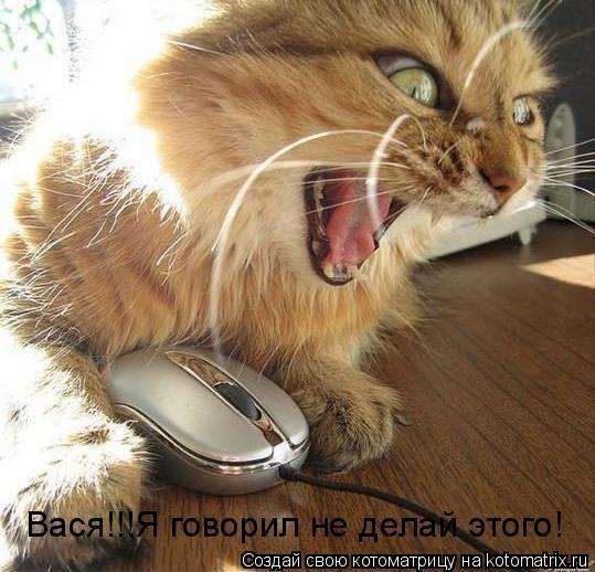 Котоматрица: Вася!!!Я говорил не делай этого!