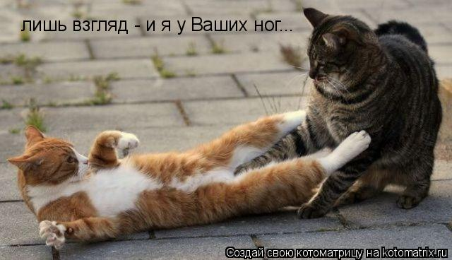 Котоматрица: лишь взгляд - и я у Ваших ног...