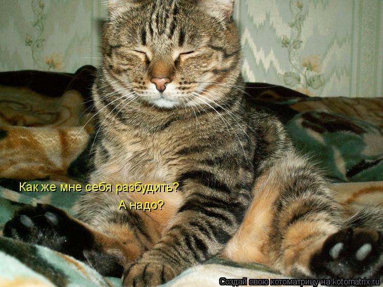 Котоматрица: Как же мне себя разбудить? А надо?