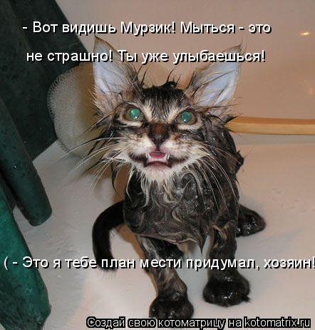 Котоматрица: - Вот видишь Мурзик! Мыться - это  не страшно! Ты уже улыбаешься! ( - Это я тебе план мести придумал, хозяин! )