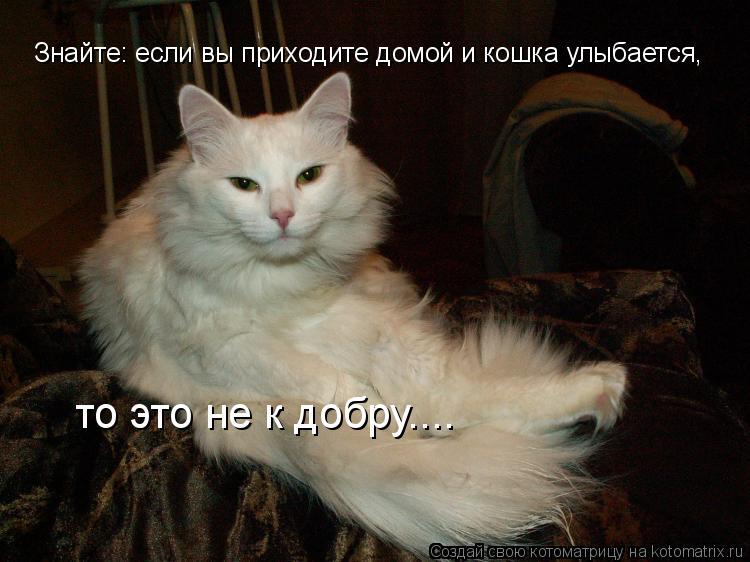 Котоматрица: Знайте: если вы приходите домой и кошка улыбается, то это не к добру....
