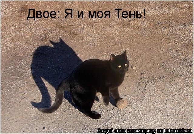 Котоматрица: Двое: Я и моя Тень!