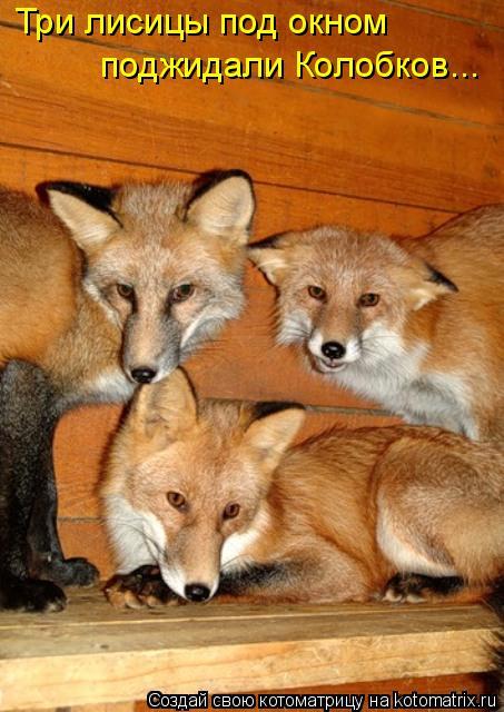 Котоматрица: Три лисицы под окном поджидали Колобков...