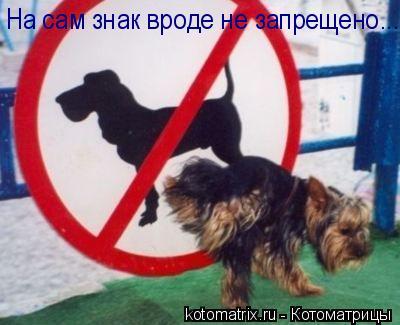Котоматрица: На сам знак вроде не запрещено...