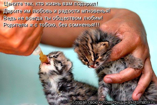 Котоматрица: Цените тех, кто жизнь вам подарил! Дарите им любовь и радости мгновенья! Ведь не всегда ты обществом любим! Родители ж с тобою, без сомненья!!!