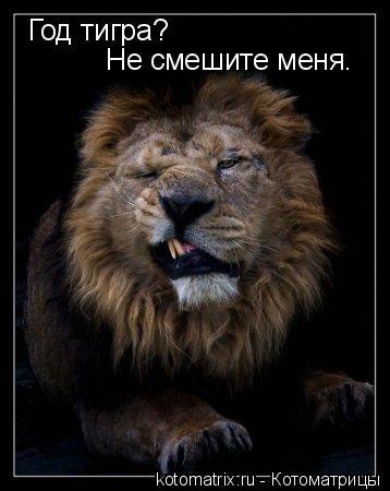 Котоматрица: Год тигра?  Не смешите меня.