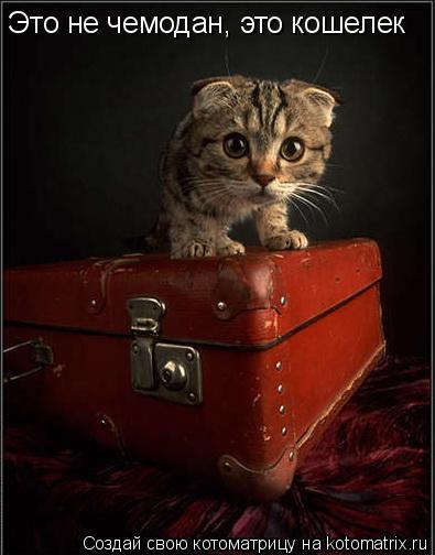 Котоматрица: Это не чемодан, это кошелек