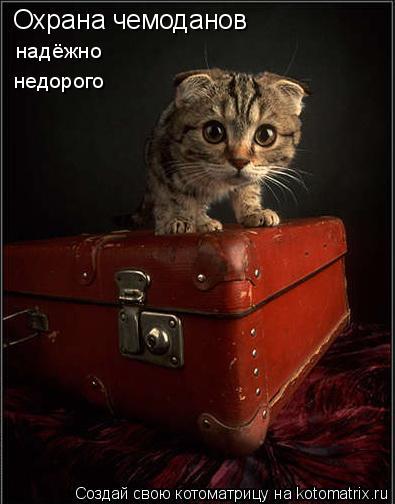 Котоматрица: Охрана чемоданов надёжно недорого