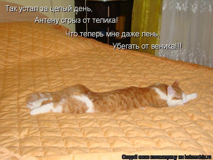Котоматрица: Так устал за целый день, Антену сгрыз от телика! Что теперь мне даже лень, Убегать от веника!!!
