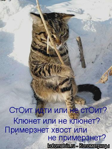 Котоматрица: СтОит идти или не стОит? Клюнет или не клюнет? Примерзнет хвост или  не примерзнет?